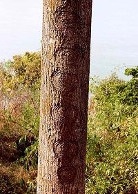 Mysterious Chakra Tree